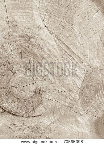 Transversal wood texture