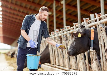 agriculture industry, farming, people and animal husbandry concept - young man or farmer with bucket feeding herd of cows with hay in cowshed on dairy farm