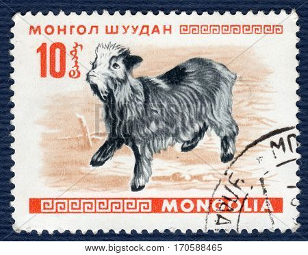 MONGOLIA - CIRCA 1968: Postage stamp printed in Mongolia shows image of a little goat, from the series