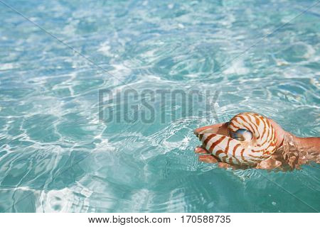 nautilus shell in hand and blue sea waves, seascape, live action