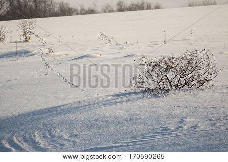 Trace of a fox on a snow-covered glade