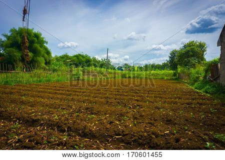 Farm field already fertilized and ready to cultivate with bushes around and beautiful sky as background photo taken in dramaga bogor indonesia java