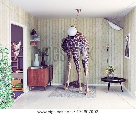 giraffe in the living room. creative concept. Photo  elements combination