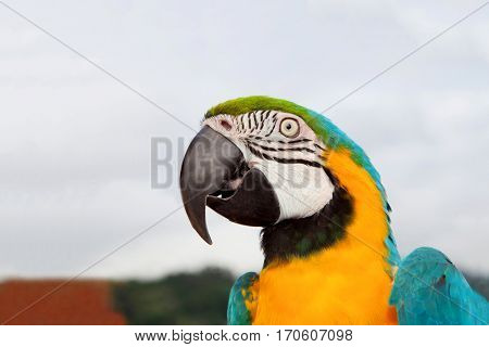 Nice portrait of a parrot with blue and yellow feathers