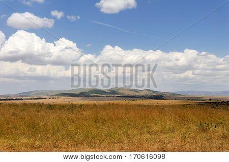 Savannah landscape in the National park in Kenya Africa