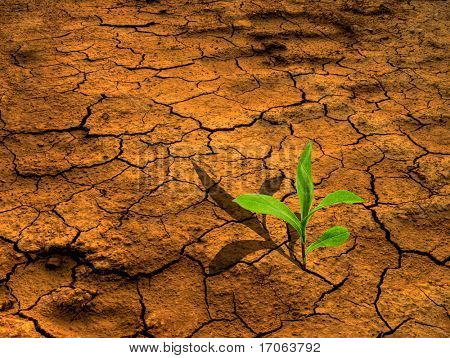 Dry earth with young flower