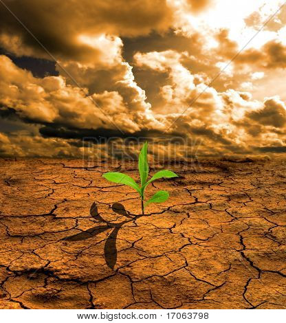 Green plant growing on dry dead earth