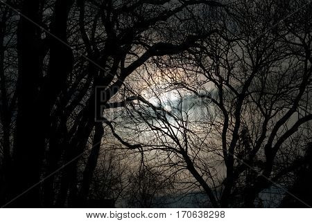 Dry branches. Dark sky. Night. Full moon. The moon in the dark sky.