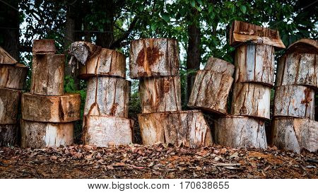 Stacked row of fire wood timber logs in bush setting