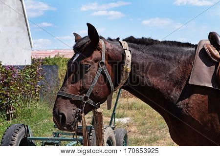 Cute horse, closeup