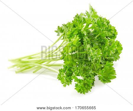 Fresh parsley on a white background