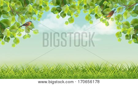 Vector summer landscape with two birds, grass, clouds, tree branches