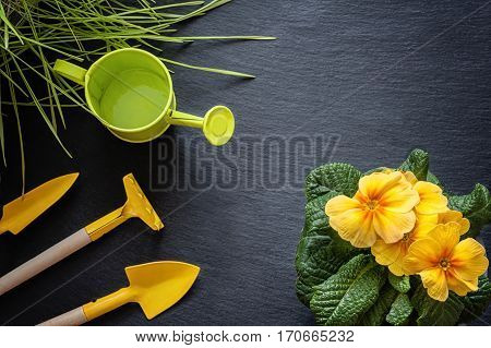 flower primrose yellow, grass, watering can, shovel and rake to plant care