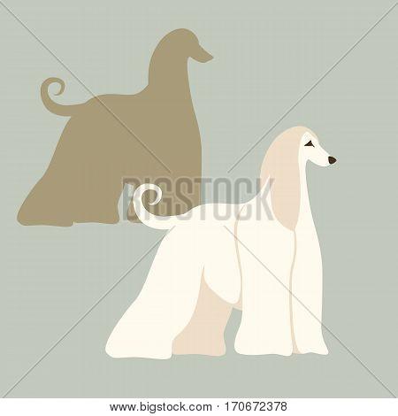 Afghan hound dog vector illustration style Flat set