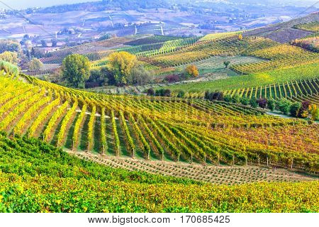 impressive vineyards of Tuscany - famous vine region of Italy