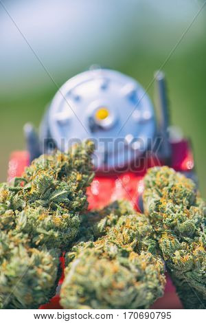 Detail of dried cannabis buds (Train Wreck strain) with plastic toy - medical marijuana concept background