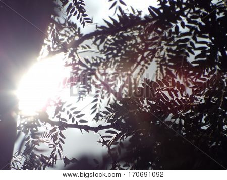 Leaves and branches shine light. Background. Atmospheric colors. Space for text.
