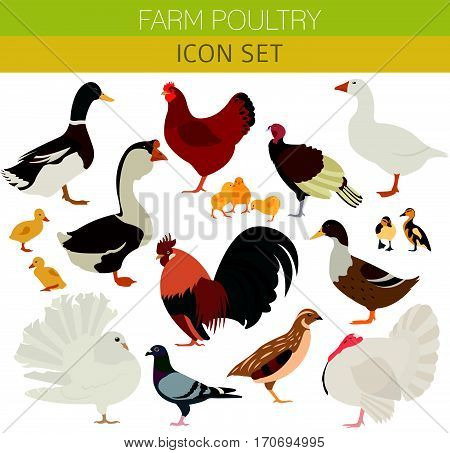Farm Animal General_3