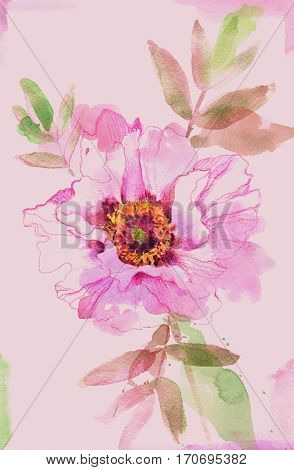 Painted watercolor pink peony.