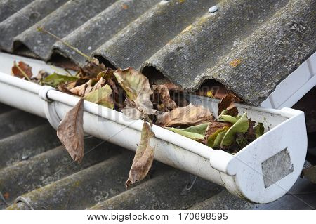 Rain Gutter Cleaning from Leaves in Autumn. Clean Your Gutters Before They Clean Out Your Wallet. Rain Gutter Cleaning. poster