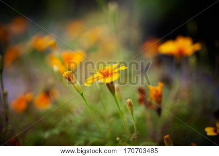 Close up of pretty flowers in summer