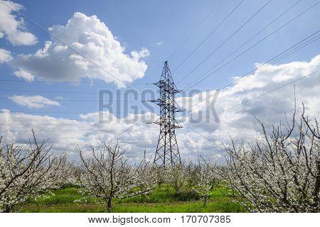 Transmission Tower In The Flowering Plum Garden