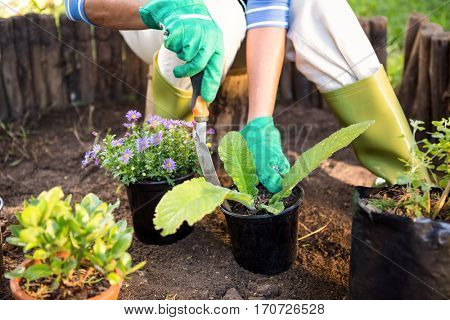 Mature female gardener planting potted plants at garden