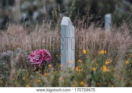 flowers and spinney on an abandoned tomb