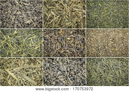 collage of nine loose leaf green tea background and texture, clockwise from top left: gunpowder, pan fired, kabusecha,occha kariban, Tinharia estate, fanning, sencha, young hyson, sencha saga