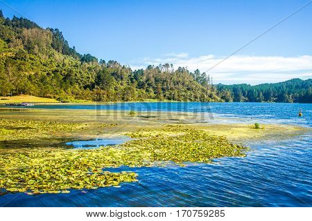 serene river view, green forest and blue water