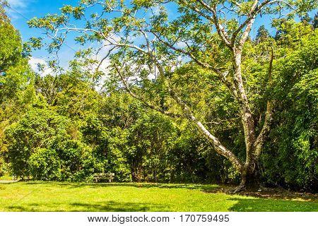 beautiful green park view