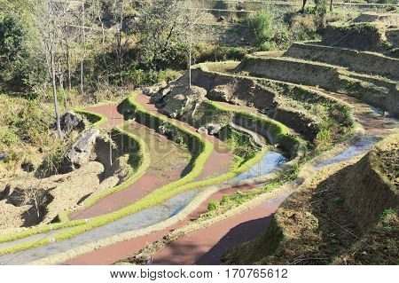 rice terraces of yuanyang in yunnan, china