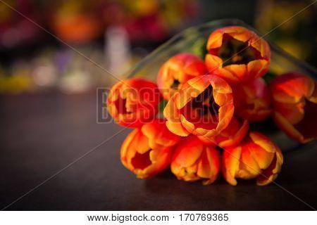 Close-up of tulip flower at flower shop