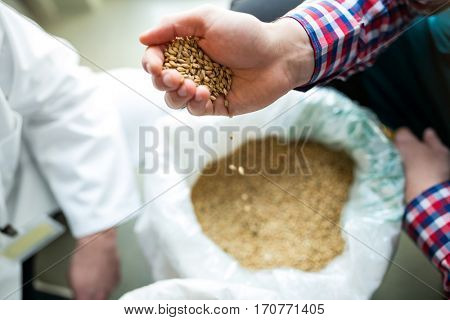 Close-up of brewer pouring grains at brewery factory