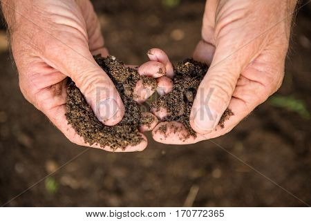 Cropped image of male gardener holding dirt at garden