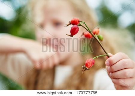 Gril holding rosehips in autumn during harvesting time