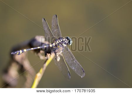 Image of dragonfly perched on a tree branch on nature background. Insect Animals.