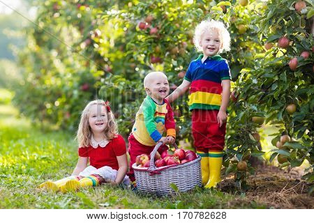 Children picking apples on a farm in autumn. Little girl boy and baby playing in apple tree orchard. Kids pick fruit in a basket. Toddler eating fruits at harvest. Fall outdoor fun for children.