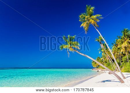 Tropical island with coconut palm trees on sandy beach. Maldives, Indian Ocean.