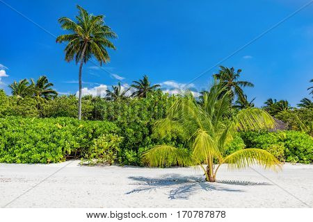 Tropical island with palm coconut trees. Sandy beach, sunny blue sky in Maldives