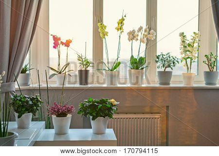 Potted flowers and plants decor in modern room. Sunny warm light from window.