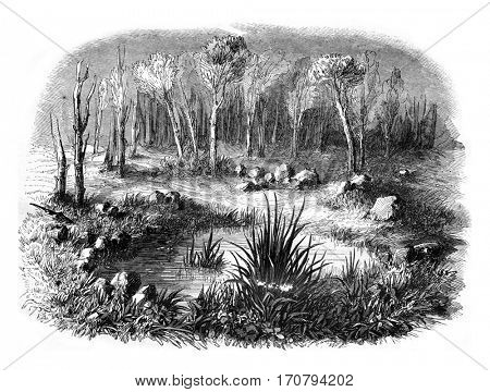 Stone circle known as the Tomb of Merlin in the forest of Paimpont, departments of Ille et Vilaine and Morhiban, vintage engraved illustration. Magasin Pittoresque 1846.