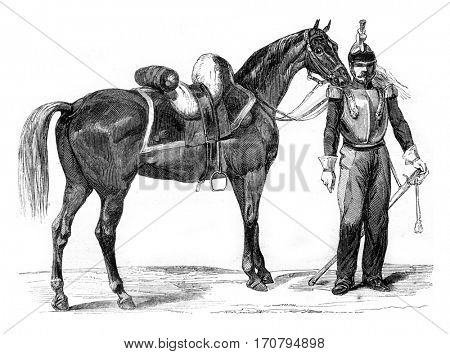 Horse Warmblood of cavalry, vintage engraved illustration. Magasin Pittoresque 1845.