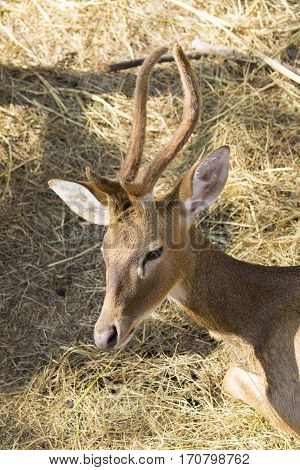 Image of a deer on nature background. wild animals.