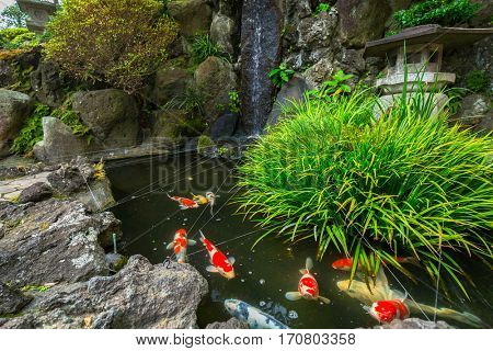 Japanese garden with gold fishes in Kamakura, Japan