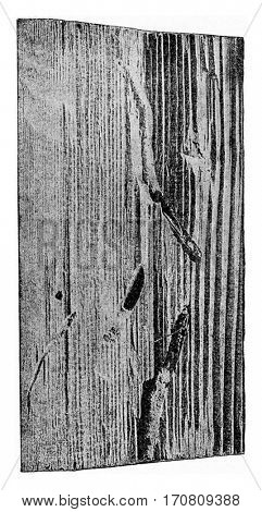 Fragment of a wooden throne of spruce age of about sixty, vintage engraved illustration.