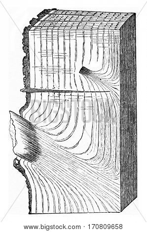 State of a portion of Oak tron after falling branches, effected following the natural process, vintage engraved illustration.