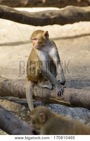 Image of monkey sitting on a tree branch.