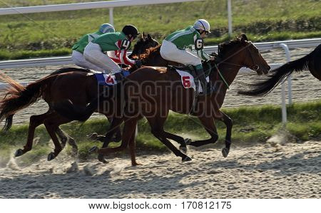 Horse race for the traditional prize Anilina in Pyatigorsk,the largest in Russia.