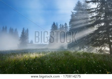 Carpathian Summer landscape with green meadows, mountain peaks and fog